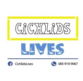CichlidsLives